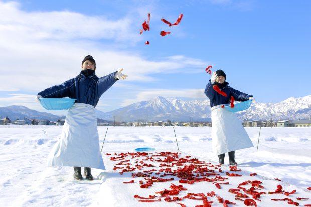 厳しい冬の寒さからうまれる 新潟・上越地方の伝統調味料「かんずり」